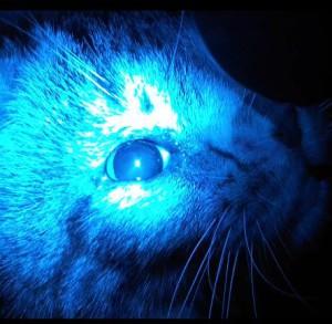 Рисунок 6. Отсутствие сужения зрачка на синий свет при колобоме зрительного нерва