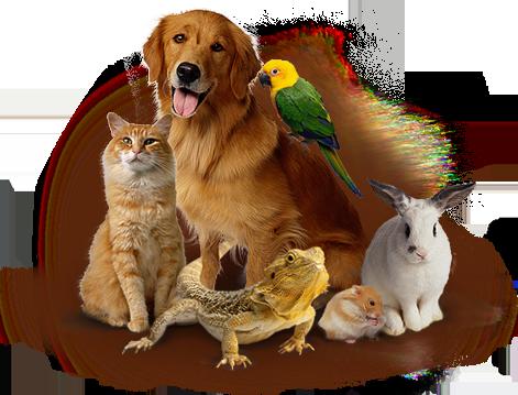 Картинки по запросу статьи о  преимуществах ветеринарных клиниках для животных